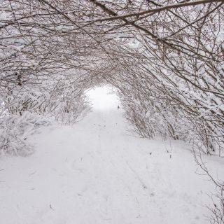 Winter walk at Rakitna