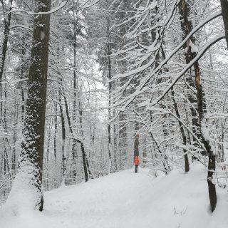 Winter in Tivoli, Ljubljana